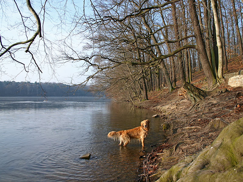 Dog Park Berlinmd
